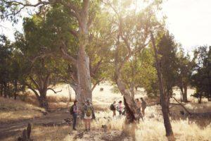 River Red Gums - Tourism Australia
